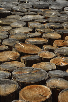 Germany, Bavaria, Sawed off tree trunks - AXF000670