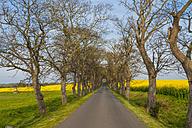 Germany, Mecklenburg-Western Pomerania, Ruegen, Tree-lined road and rape fields - MJF001179