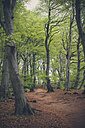 Germany, Mecklenburg-Western Pomerania, Ruegen, Jasmund National Park, Beech forest - MJF001247