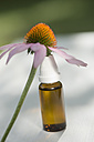 Purple coneflower, Echinacea, leaning on flask with solution - ASF005368
