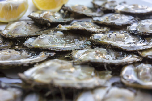 Croatia, Peljesac, Mali Ston, Fresh oysters - WEF000102
