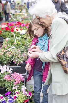 Great-grandmother and great-granddaughter looking at blossom of  snapdragon, Antirrhinum, on weekly market - STB000171
