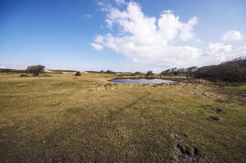 Netherlands, Zeeland, Walcheren, Domburg, Dune landscape - THAF000438