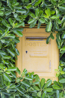 France, Provence Alpes Cote d'Azur, Var, Giens peninsula, postbox surrounded by climbing plant - JB000106