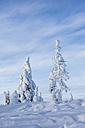 Scandinavia, Finland, Rovaniemi, Trees in wintertime - SR000534