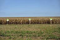 South America, Brazil, Mato Grosso, Primavera do Leste, Trial field, Maizefield, Genetically modified maize - FLK000306