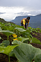 Bolivia, Yungas, Carmen Pampa, farmer working on pumpkin field - FLK000309
