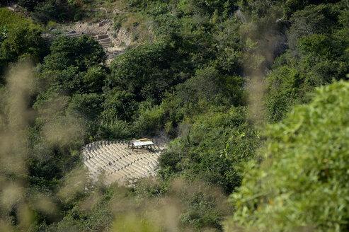 South America, Bolivia, Coroico, Illegal Coca field, Erythroxylum coca - FLK000271