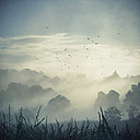 Misty landscape at backlight, composite - DWI000078