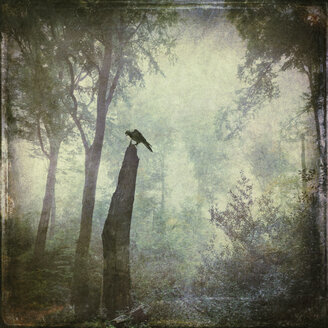 Bird sitting on dead wood in forest, alienation - DWI000075