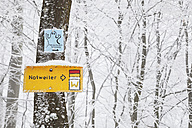 Germany, Rhineland-Palatinate, Palatinate Forest, Region Wegelnburg and Notweiler, Signs on a tree, Hiking path, Palatinate Forest-North Vosges Biosphere Reserve - GW002882