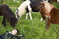 Germany, Brandenburg, Bienenwerder,  female farmer relaxing on meadow in front of her horses - FX000006