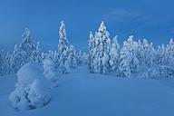 Finland, Rovaniemi, Winter forest at blue hour - SR000548