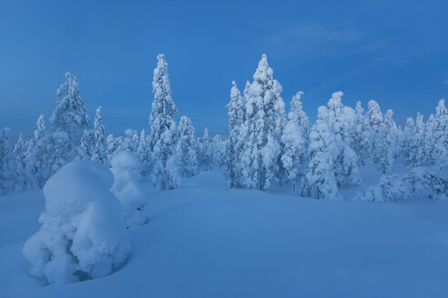 Finland, Rovaniemi, Winter forest at blue hour - SR000548