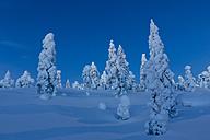 Finland, Rovaniemi, Winter forest at blue hour - SR000560