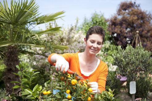 Portrait of female gardener trimming lemon tree at garden centre - MAEF008443