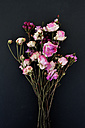 Bunch of withered flowers in front of black background - AXF000682