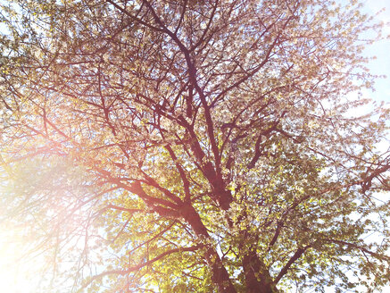 Tree in back light in park in Hamburg, Germany - BMA000046