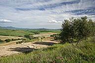 Italy, Tuscany, Olive tree and field near Pienza - MYF000347
