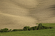Italy, Tuscany, Crete Senesi, Field - MYF000351
