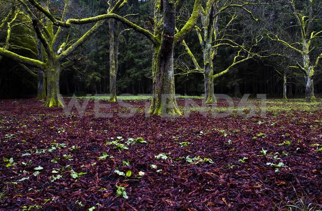 Germany, Bavaria, Munich, Forstenried Park, trees in the morning light - FCF000241