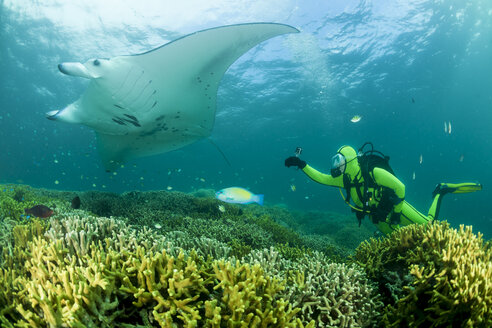 Oceania, Micronesia, Yap, Diver with reef manta ray, Manta alfredi - FGF000078