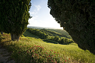 Italy, Tuscany, Crete Senesi, Cypresses and landscape - MYF000444