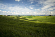 Italy, Tuscany, Province of Siena, Typical landscape near Siena - MYF000397