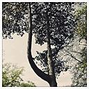Tree, Hamburg, Germany - MSF004038