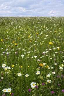 Germany, Baden-Wuerttemberg, Flower meadow - ELF001088