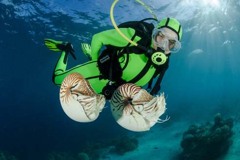 Oceania, Palau, Diver watching Palau nautilusses, Nautilus belauensis, in Pacific Ocean - FGF000043