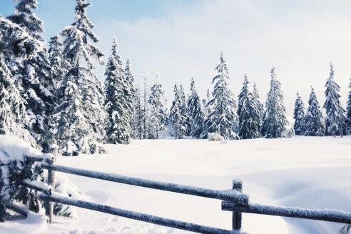 Germany, Lower Saxony, winter landscape in Harz - MEM000241