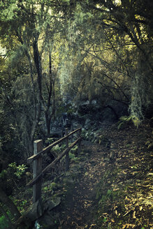 Spain, Canary Islands, La Palma, forest in the North of the Island - MEM000248