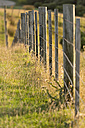 New Zealand, Tasman, Golden Bay, Puponga, old fence on a meadow in the Puponga hills - SHF001420