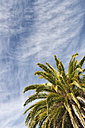 New Zealand, Nelson, palm tree under a cloudy sky - SHF001425
