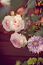 Germany, Saxony, Roses, Rosa, and Clematis - MJF001298