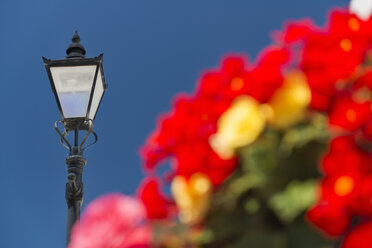 New Zealand, Golden Bay, Collingwood, flowers and a street light - SHF001471