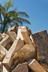 New Zealand, Golden Bay, Collingwood, pile of firewood and a palm tree - SHF001472