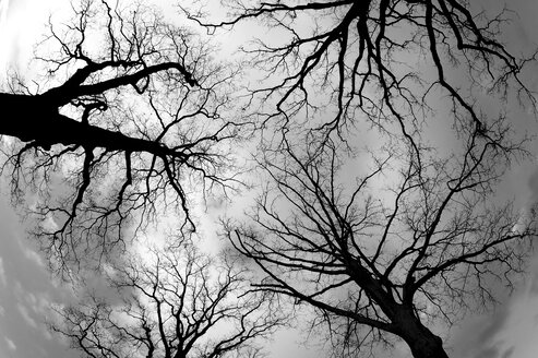 snabruecker Land, Trees in winter against the sky - HOH000884