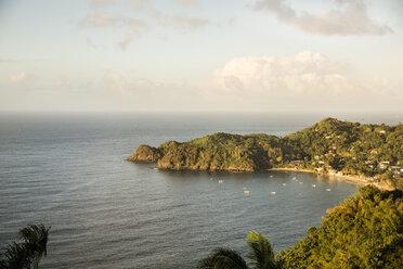 Caribbean, Trinidad and Tobago, Tobago, Castara - SKF001551
