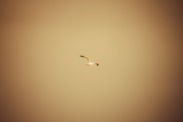 Germany, Hamburg, seagull in the sky - KRPF000541