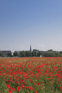Germany, Cologne Widdersdorf, poppy field and St. Jacobus church at historic town in the background - GWF003555
