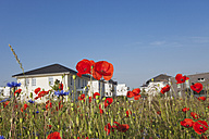 Germany, Cologne Widdersdorf, poppies and cornflowers in front of development area - GWF003570