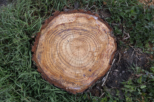 Annual rings of a sawed tree, elevated view - AXF000701
