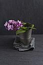 Common lilac, Syringa vulgaris, in a tin cup - MYF000457