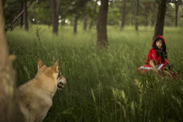 Red Riding Hood meeting the wolf in the forest - FCF000274