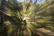 New Zealand, South Island, Tasman, Kahurangi national park, mountainous native forest zoomed in back light - SHF001529