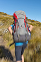 New Zealand, South Island, Tasman, Kahurangi national park, boy with backpack hiking - SHF001534