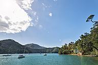 New Zealand, South Island, Marlborough Sounds, Tennyson Inlet, sounds of Duncan Bay - SHF001543