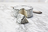 French goat cheese with ash rind - LVF001513